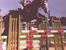 Experienced, talented showjumper by Unbelievable Darco