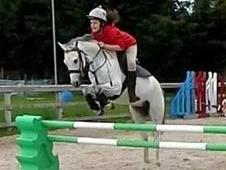 Stunning Grey Welsh Section B Gelding 13hh