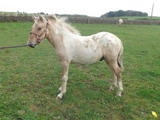 Frankie, stunning youngster for sale