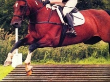 All Rounder horse - 9 yrs 16.0 hh Coloured - Tyne And Wear