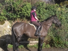 Smart, Hunter, All Rounder Mare