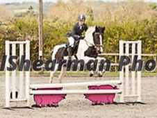 15hh 6yrs *Open to offers*