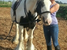 Vicky. . . 15hh 8 Yr Old Coloured Ride And Drive Black And White ...