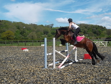 15. 1hh All Rounder Gelding For Sale