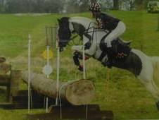 14. 1hh WB x connemara; scopey potential PC / BE / BSJA pony for ...