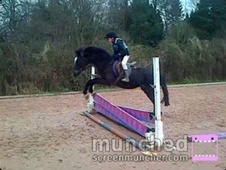 All Rounder horse - 15 yrs 12.2 hh Bay - Shropshire