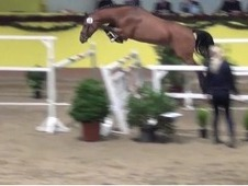 Cottano - The Required Go For Show Jumping And Eventing!!