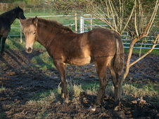 Stunning Section D Filly Foal