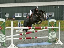 All Rounder horse - 15 yrs 15.0 hh Black - Aberdeenshire