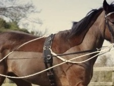 All Rounder horse - 7 yrs 14.3 hh Bay - Kent
