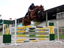 Victor - High Quality Sport Horse!