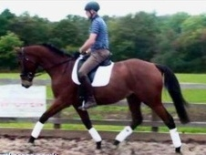 All Rounder horse - 4 yrs 10 mths 16.1 hh Bay - Surrey