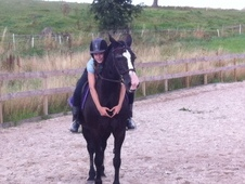 14. 3hh pony club/sj mare for sale