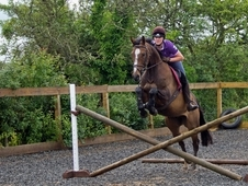 16HH Project Horse