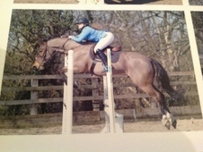 Quality Working Hunter/BS/Pc gelding