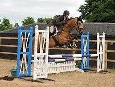 Rising 5 year old event mare