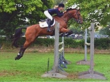 Super Consistent Showjumper