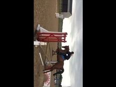 ****Further Reduced college forces sale **15:3 Well Bred Sport Horse