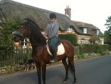 All Rounder horse - 7 yrs 16.1 hh Bay - Dorset