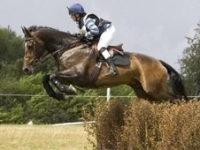 All Rounder horse - 14 yrs 11 mths 17.0 hh Dark Bay - East Sussex