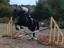 Gorgeous Allrounder For Sale