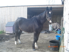 16. 3hh ISH for full loan