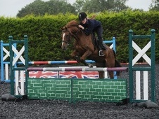 Pony Club Ponies horse - 17 yrs 14.0 hh Chestnut - Somerset