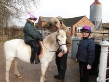 All Rounder horse - 10 yrs 6 mths 12.0 hh Grey - Lincolnshire