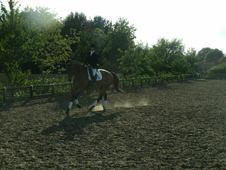 Exciting Dressage Prospect