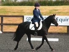 All Rounder horse - 16 yrs 13.1 hh Black - Hampshire