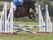 14. 3hh First Horse / Sj Potential
