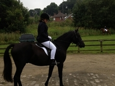 14. 2H Black Part Arab/Sec D Gelding