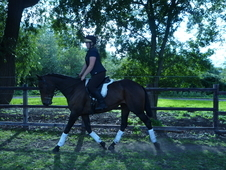 ***eventer/pony Club Prospect***