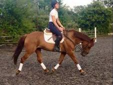 **EASY FUN VERSATILE ALLROUNDER/RC/PC 15. 2 8YRS MARE**