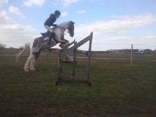All Rounder horse - 14 yrs 10 mths 12.2 hh Tobiano - Cheshire