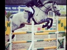 Talented Showjumper And Alrounder
