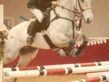 Pony Club Ponies horse - 11 yrs 14.2 hh Grey - Gwent