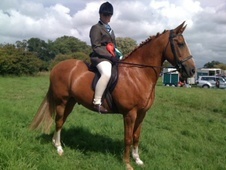 All Rounder horse - 14 yrs 3 mths 15.2 hh Chestnut Roan - Staffor...