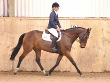 16. 1hh Genuine Allrounder 11yrs