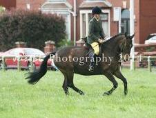 15. 1hh, 12 Year Old, All Rounder