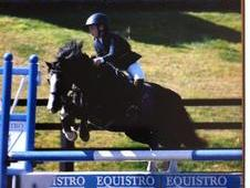 12. 2 Stunning Showing/jumping Pony