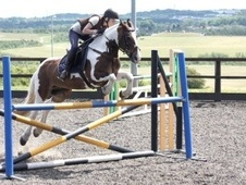Pony Club Ponies horse - 12 yrs 14.2 hh Coloured - Tyne And Wear
