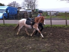 Lead Rein & First Ridden horse - 6 yrs 1 mth 11.2 hh Chestnut Roa...