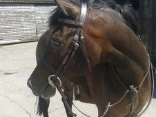 Pc/ Allrounder 14. 3hh Welsh X Mare