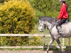 All Rounder horse - 4 yrs 2 mths 15.0 hh Blue Roan - Tyne And Wear