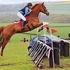 ***REDUCED*** 17.2hh Jumping Machine - West Yorkshire