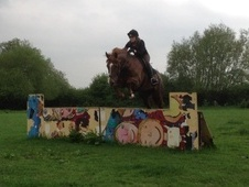All Rounder horse - 6 yrs 15.3 hh Liver Chestnut - Oxfordshire