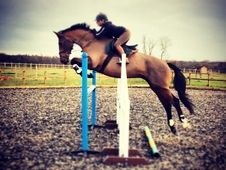 16. 2hh Cassini Mare, Superb jumping prospect