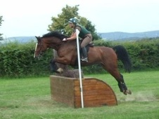 All Rounder horse - 14 yrs 16.3 hh Bay - West Sussex