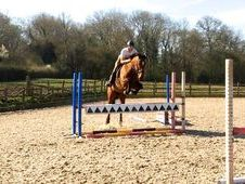 16. 2hh 8yrs Ish Bay Gelding By Classic Vision